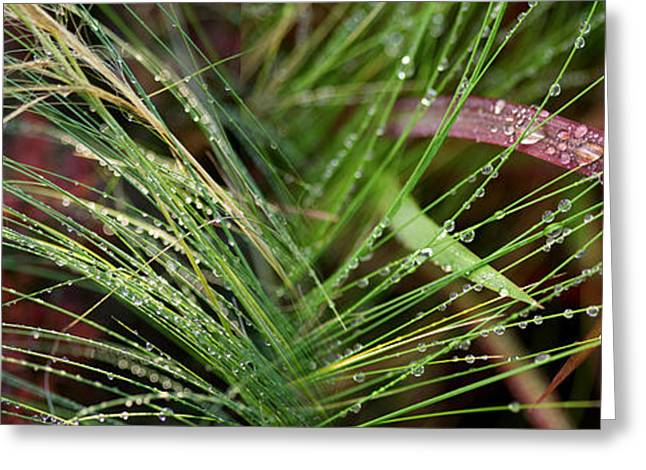 Green Blade Of Grass Greeting Cards - Dew Drops On Grass Greeting Card by Panoramic Images