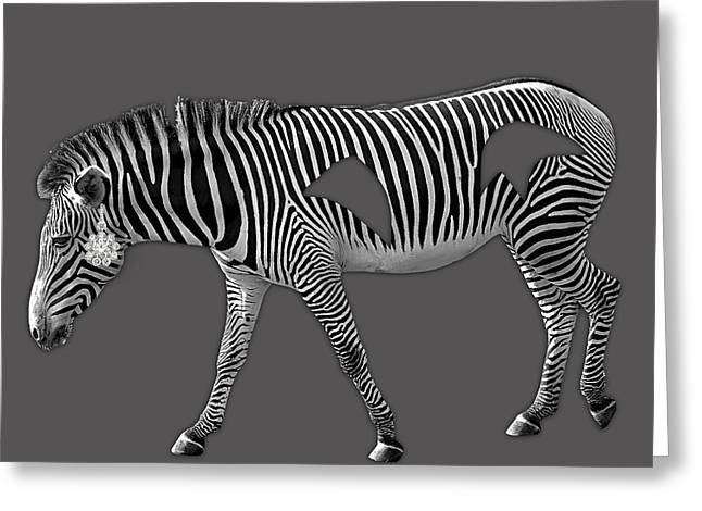 Zebras Greeting Cards - Diamond in The Rough Zebra Greeting Card by Marvin Blaine