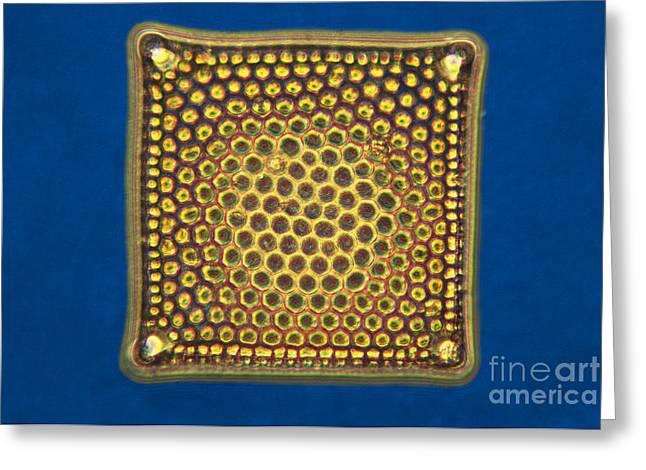 Diatoms Photographs Greeting Cards - Diatom - Triceratium Greeting Card by James W. Evarts