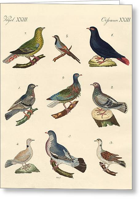 Madagascar Drawings Greeting Cards - Different kinds of pigeons Greeting Card by Splendid Art Prints