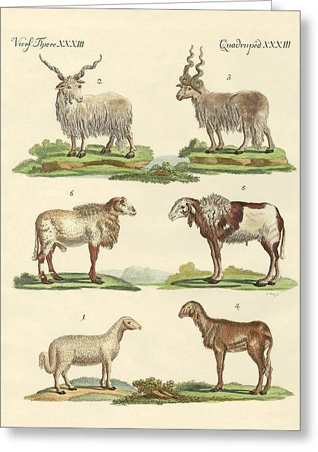 Different Kinds Of Sheep Greeting Card by Splendid Art Prints