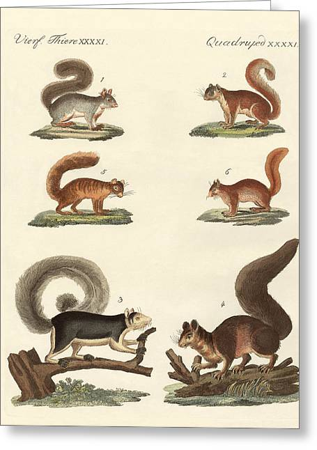 Fox Squirrel Drawings Greeting Cards - Different kinds of squirrels Greeting Card by Splendid Art Prints