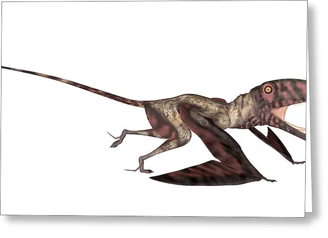 Dimorphodon Pterosaur Greeting Card by Friedrich Saurer