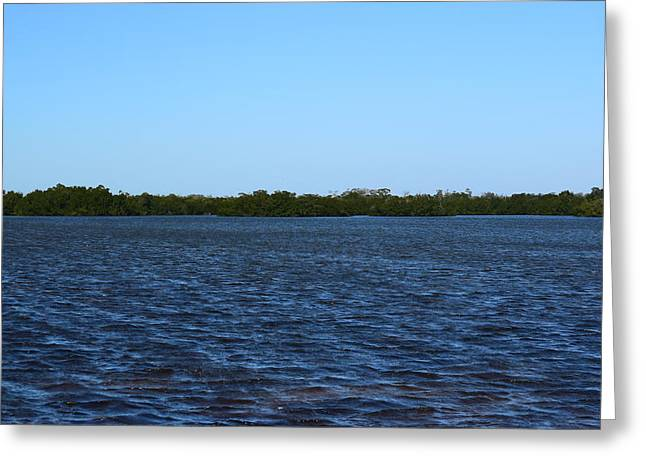 J N Ding Darling National Wildlife Refuge Greeting Cards - Ding Darling View Greeting Card by Curtis Krusie