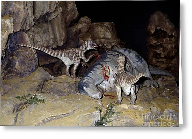 Deinonychus Greeting Cards - Dinosaurs Feeding On Prey, Museum Model Greeting Card by Natural History Museum, London
