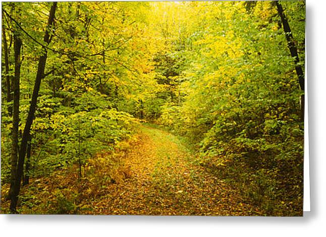 Change The Destination Greeting Cards - Dirt Road Passing Through A Forest Greeting Card by Panoramic Images