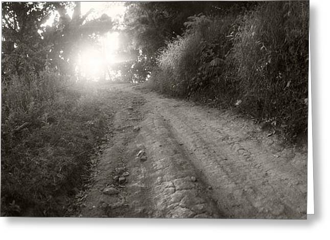 Mai Greeting Cards - Dirt Road Through A Forest, Chiang Mai Greeting Card by Panoramic Images