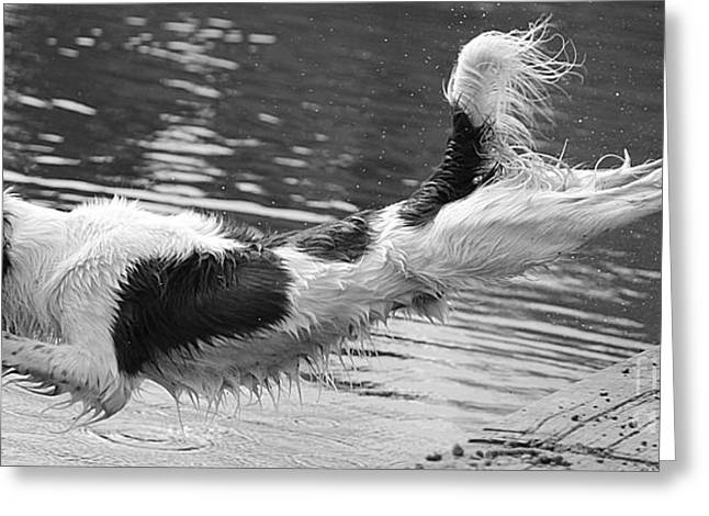 Diving Dog Greeting Cards - Diving Spaniel Greeting Card by Michelle Orai
