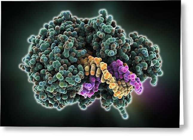 Motor Protein Greeting Cards - DNA helicase molecule Greeting Card by Science Photo Library