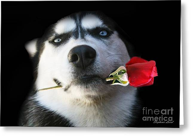 Husky Greeting Cards - Do you Tango Greeting Card by Stephanie Laird