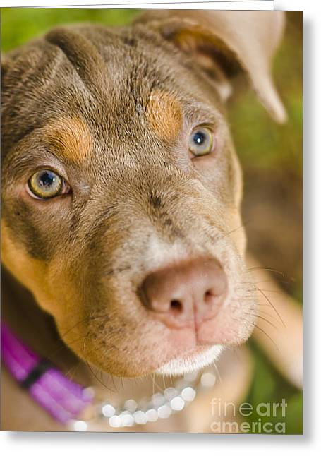 Dog Head Greeting Cards - Dog obedience training Greeting Card by Ryan Jorgensen