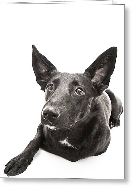 Wide Eyed Wonder Greeting Cards - Dog Puppy  Greeting Card by Donald  Erickson