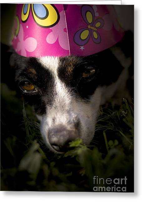 Dog Tired Party Animal Greeting Card by Jorgo Photography - Wall Art Gallery
