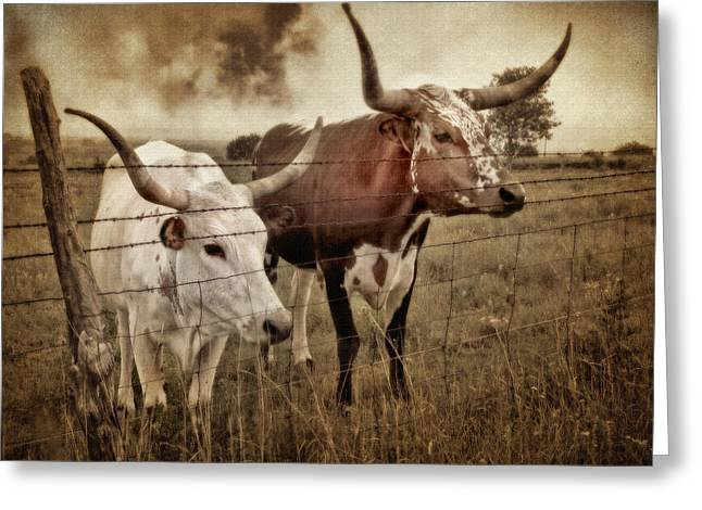 Texas Longhorns In Sepia Greeting Card by David and Carol Kelly