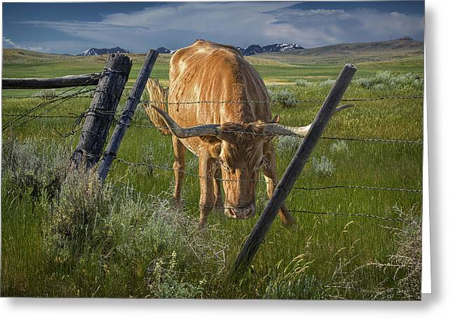 Montana Landscapes Photographs Greeting Cards - Dont Fence Me In Greeting Card by Randall Nyhof