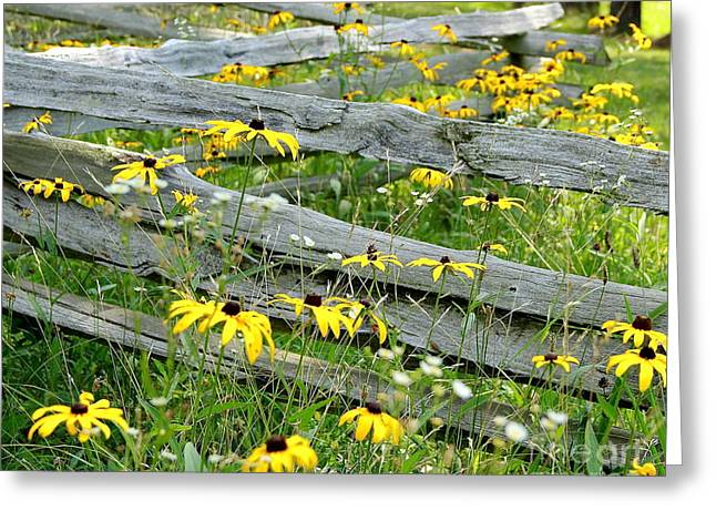 Split Rail Fence Greeting Cards - Dont Fence Me In Greeting Card by Robin Erisman