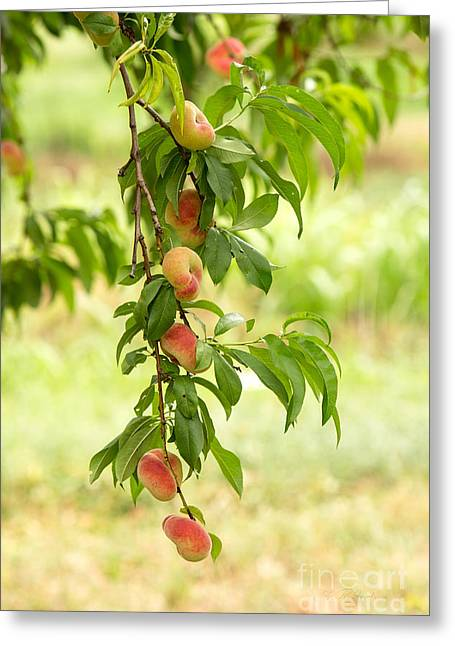 Kitchens Greeting Cards - Donut Peaches Greeting Card by Iris Richardson