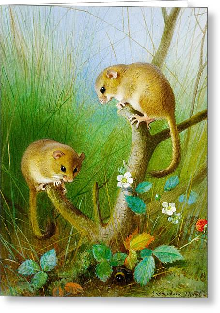 Dormouse Greeting Cards - Dormice Greeting Card by Archibald Thorburn