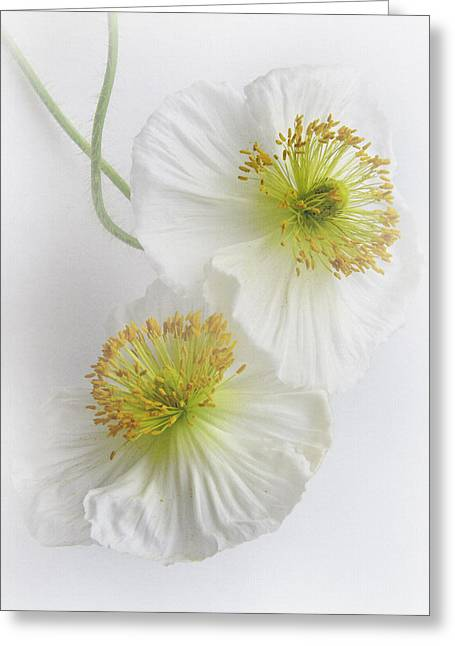 Blooms Greeting Cards - Double Delight Greeting Card by David and Carol Kelly