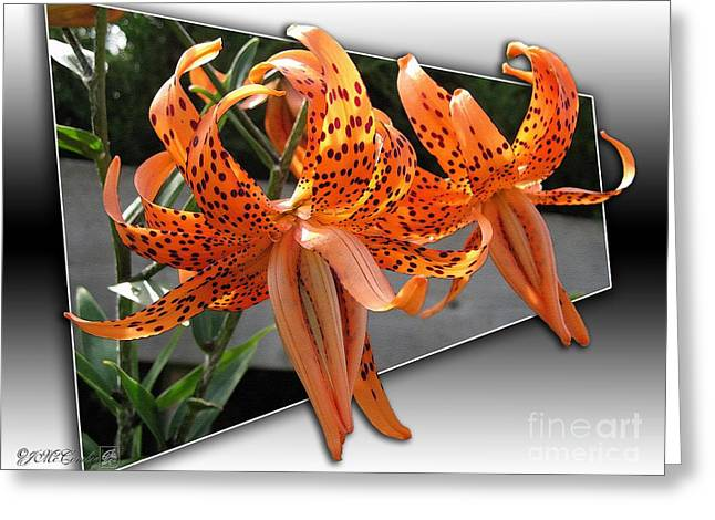 Pleno Greeting Cards - Double Tiger Lily named Flora Pleno Greeting Card by J McCombie