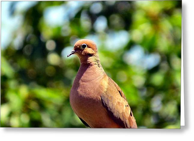 Morning Dove Photograph Greeting Cards - Dovey Greeting Card by Michelle Milano
