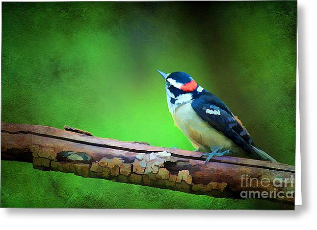 Cute Tree Images Greeting Cards - Downy Woodpecker Greeting Card by Darren Fisher