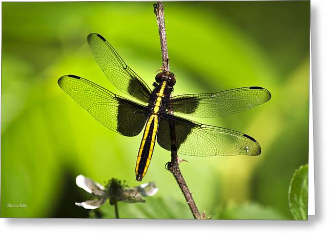 Invertebrates Greeting Cards - Dragonfly Greeting Card by Christina Rollo