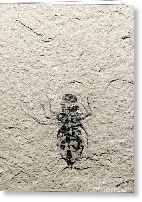 Asti Greeting Cards - Dragonfly Larva Fossil Greeting Card by Sinclair Stammers