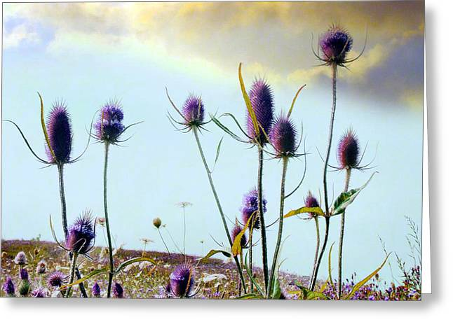 Surreal Landscape Greeting Cards - Dream Field Greeting Card by Gothicolors Donna Snyder