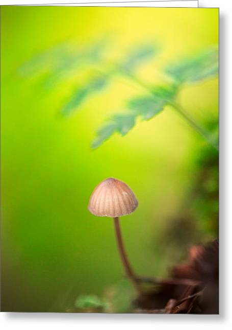 Toadstools Greeting Cards - Dream Mushroom Greeting Card by Dirk Ercken