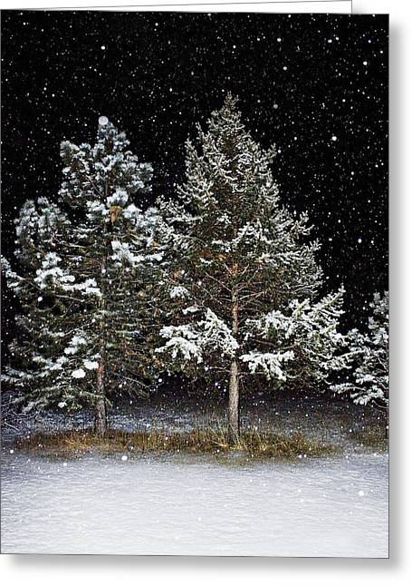 Winter Night Greeting Cards - Dreaming In The Night Greeting Card by Janie Johnson