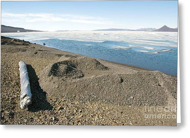 Axels Greeting Cards - Driftwood And Glacier, Canadian Arctic Greeting Card by Dr Juerg Alean