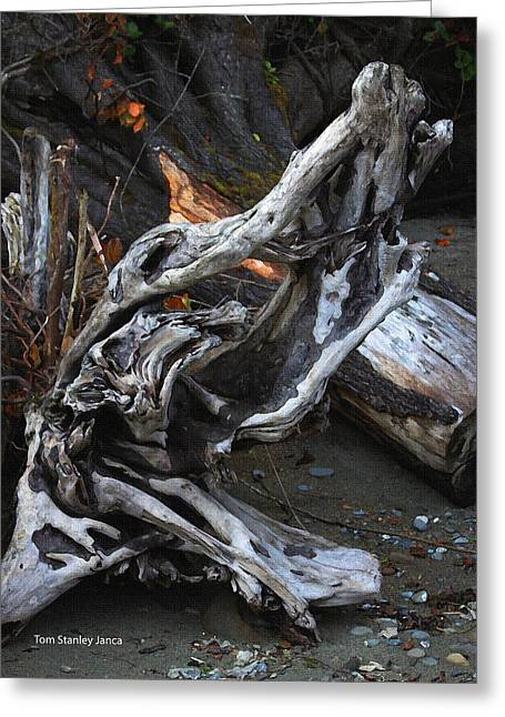Driftwood On The Beach Greeting Card by Tom Janca
