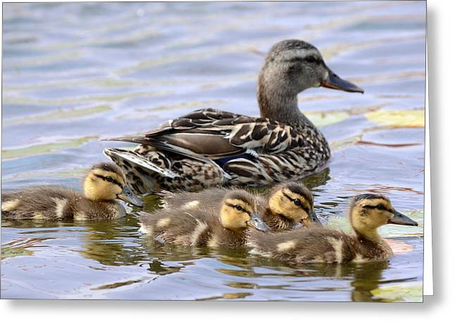 Baby Mallards Greeting Cards - Duck Soup 4 Greeting Card by Fraida Gutovich