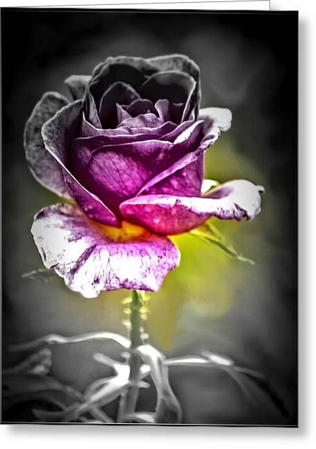 Duo Tone Greeting Cards - Duo-tone Rose of Love Greeting Card by Tracy Brock
