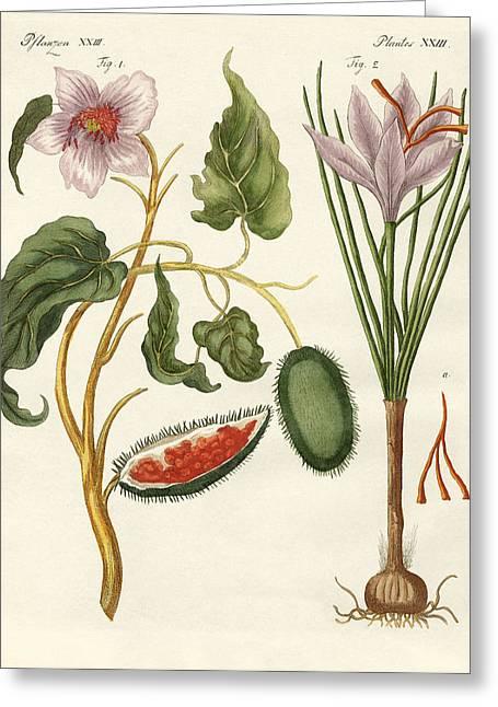 Spice Drawings Greeting Cards - Dye plants Greeting Card by Splendid Art Prints