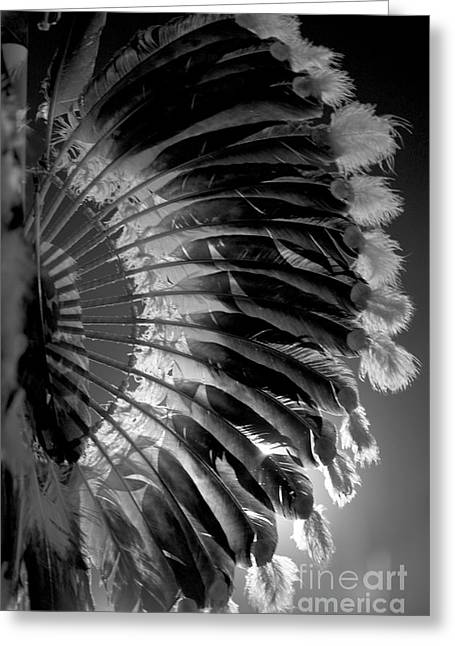 Eagle Feathers Greeting Cards - Eagle Feathers Greeting Card by Chris  Brewington Photography LLC
