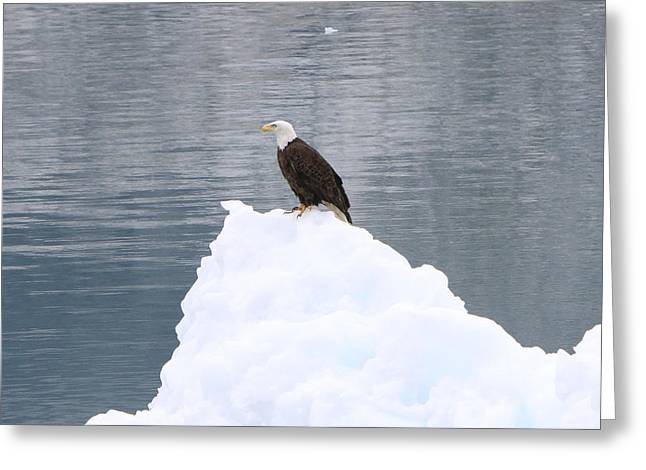 Eagle Pyrography Greeting Cards - Eagle on Ice Greeting Card by Shoal Hollingsworth