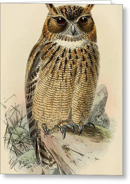 Eagle Feathers Greeting Cards - Eagle Owl Greeting Card by J G Keulemans