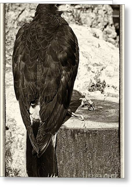 Historical Re-enactments Greeting Cards - Eagle Greeting Card by Jose Elias - Sofia Pereira