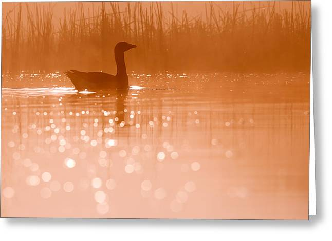Duck Pond Greeting Cards - Early Morning Magic Greeting Card by Roeselien Raimond