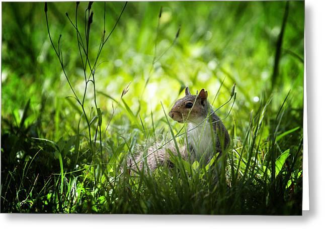 Eastern Gray Squirrels Greeting Cards - Eastern gray squirrel Greeting Card by Zoe Ferrie