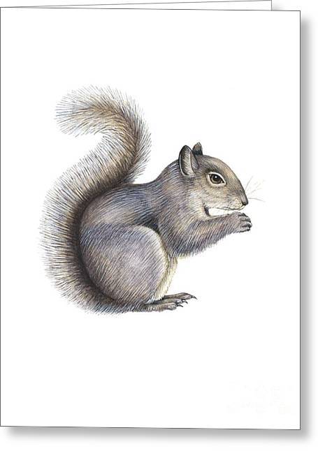 Eastern Grey Squirrel Greeting Cards - Eastern Grey Squirrel, Artwork Greeting Card by Lizzie Harper