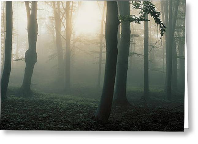 Forest Floor Photographs Greeting Cards - Ekero Uppland Sweden Greeting Card by Panoramic Images