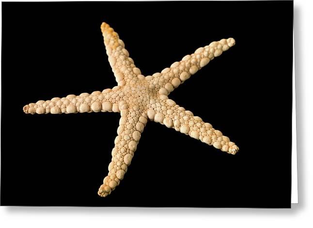 Elegant Starfish Greeting Card by Natural History Museum, London