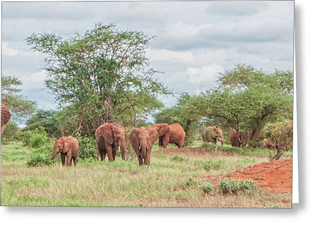 Animals Love Greeting Cards - Elephant Herd Greeting Card by Alex Hiemstra