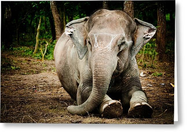 Tibetan Buddhism Greeting Cards - Elephant Greeting Card by Raimond Klavins