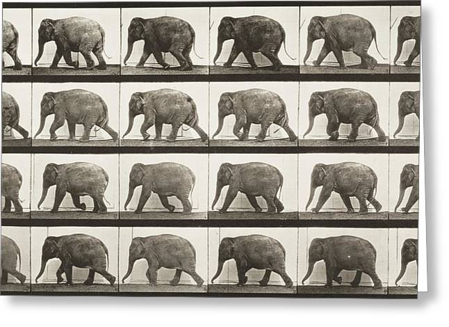 Elephant Walking Greeting Card by Celestial Images