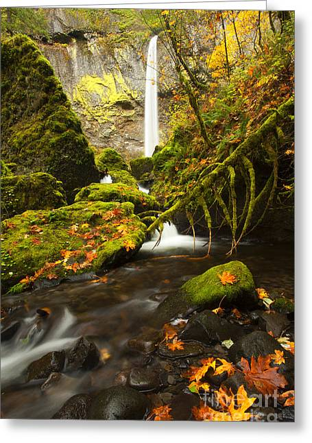 Moss Green Photographs Greeting Cards - Elowah Autumn Greeting Card by Mike  Dawson