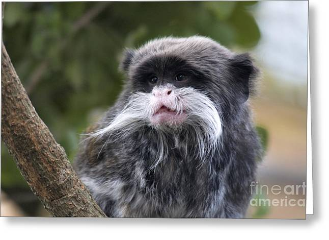 Mustache Greeting Cards - Emperor Tamarin Greeting Card by Mark Newman